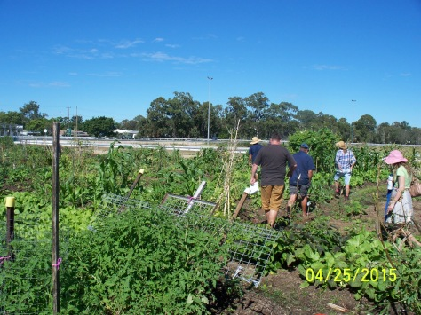 25.04.15 group following Lyle through the refugee gardens