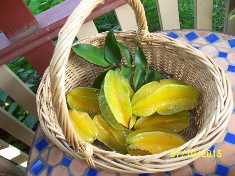 10.07.15 this mornings crop of Carambola