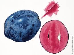 davidson plum 2