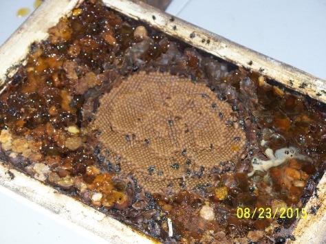 23.08.15 hive split